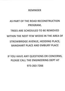 road reconstruction tree removal